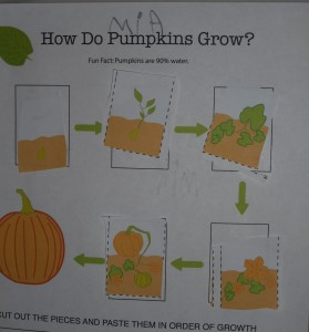Pumpkin life cycle worksheet from education.com