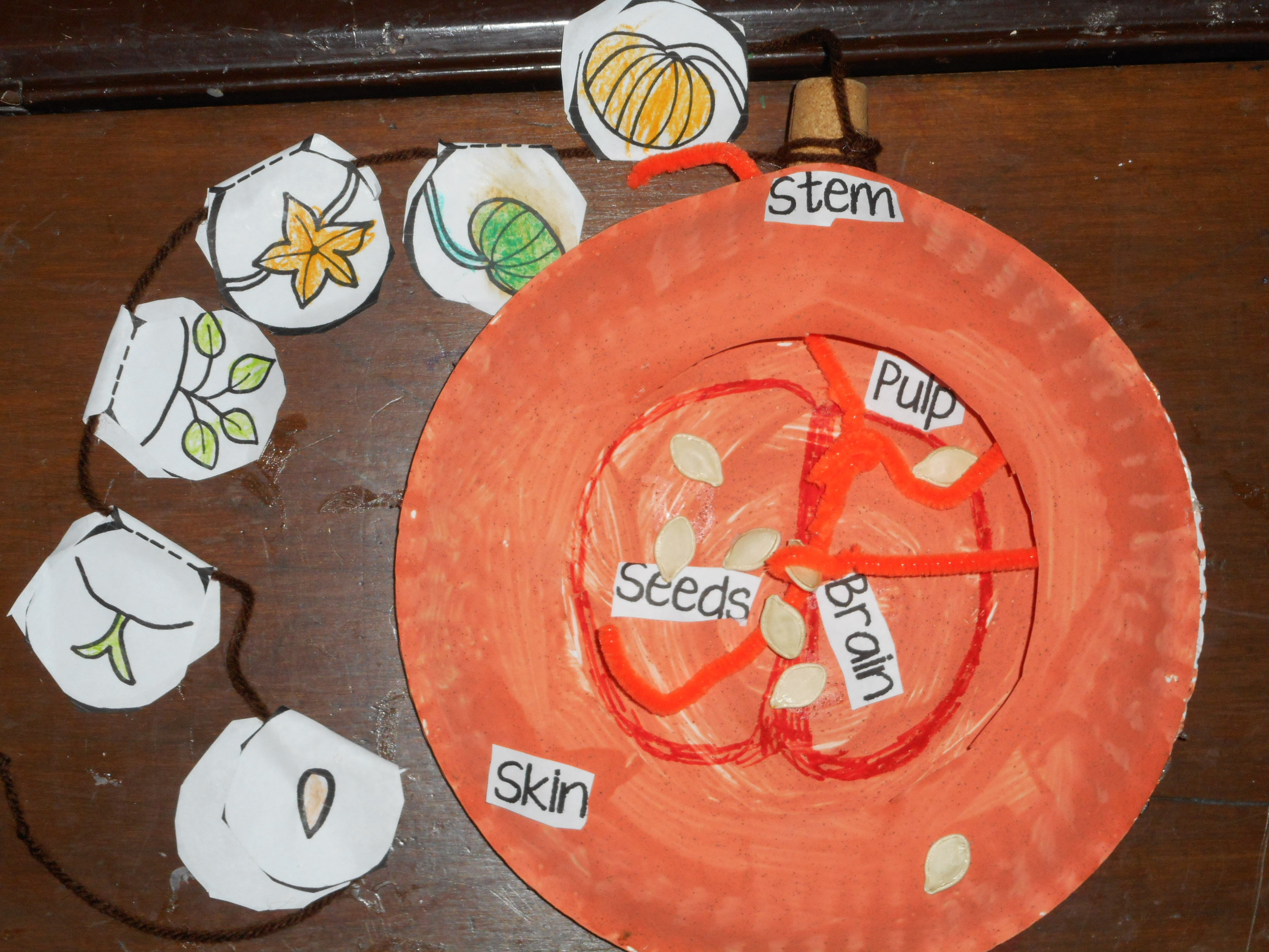 worksheet Parts Of A Pumpkin Worksheet pumpkin parts the files of mrs e science craft